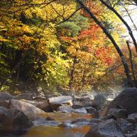 Swift River - White Mountains, NH Autumn Art Prints & Posters by Erin Paul Donovan