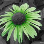 """Go Green"" by MHP-Photography"