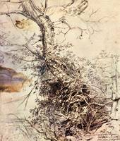 Study of Tree by Peter Paul Rubens