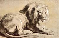 Study of a Lion by Peter Paul Rubens