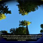 """""""A rise of Trees p"""" by CDBDesign"""