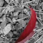 """Last leaf"" by Ekaterina_V_Naumenko"