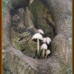 """""""Fungus Hotel"""" by ttelyob"""