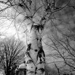"""Spirit of the Birch Tree"" by vonAshPhotography"