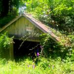 """Old Cabin"" by MHP-Photography"