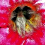 """Hibiscus Splendor"" by jackrosado57"