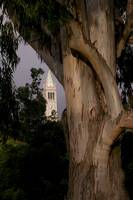 Berkeley Camponile by WorldWide Archive