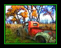 OLD TREE TRUCK