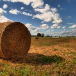 """Hey Hay HDR"" by Chris_P"