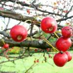 """berries"" by LoraxLady"