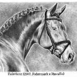 """Stallion Fidertanz"" by horseportraits"