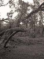 trees after hurricane