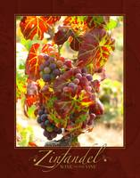 Zinfandel on the Vine