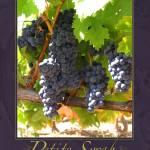 """Petite Syrah on the Vine"" by shariwarren"