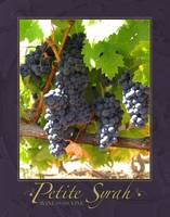 Petite Syrah on the Vine
