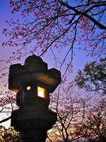 Lights:  Lantern and Cherry Blossoms