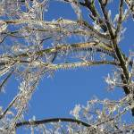 """Icy Tree"" by Hostilefay"