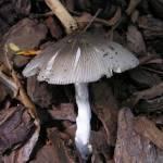 """More Fungus"" by Hostilefay"
