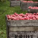 """Fruit"" by thegardenpathphotography"