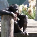 """""""Monkey"""" by jjohns31"""