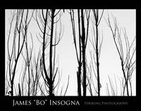 Tree Branches Black and White  Abstract Poster