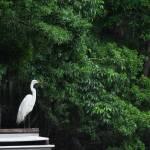 """Egret"" by RandiKuhne"