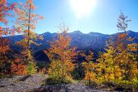 Breck Fall