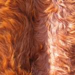 """Fur"" by karanichole"
