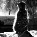 """""""Meerkat"""" by karanichole"""