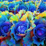 Yuma Cabbages, Photograph