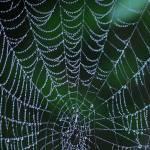 """Web of Life 1"" by lightcaptured"