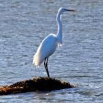 """""""egret"""" by artfilmusic"""