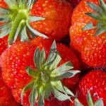 """003286 Strawberries"" by johnrochaphoto"