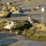 """Ocean Birds"" by LanceIFitzsimmons"