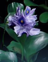 Water Hyacinth at Night