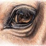 """Horse Eye"" by ArtsandDogs"