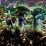 """mushroomfield"" by naturefantasy"
