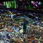 """""""mushroomsentry"""" by naturefantasy"""