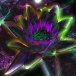 """waterlily"" by naturefantasy"