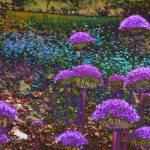 """alliumfield"" by naturefantasy"