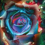 """bluerose"" by naturefantasy"