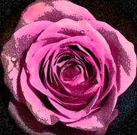 Wedding Rose Watercolour Heavy