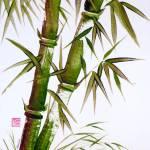 """bamboo_essence"" by gbensonart"