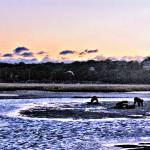 """RIDGEVALE BEACH CLAM DIGGERS AT SUNRISE"" by Clipprx"