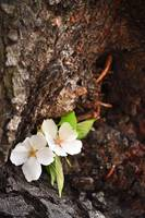 a flower growing out of a cherry tree 2