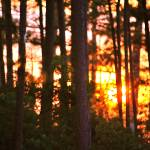 """""""the sun hides behind the trees"""" by moonlessnight97"""