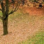 """autumn ground"" by moonlessnight97"