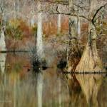 """Fall at Stumpy Lake"" by nancielaing"
