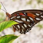 """""""Butterfly"""" by RandiKuhne"""