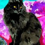 """""""my black cat"""" by IrisGrover"""